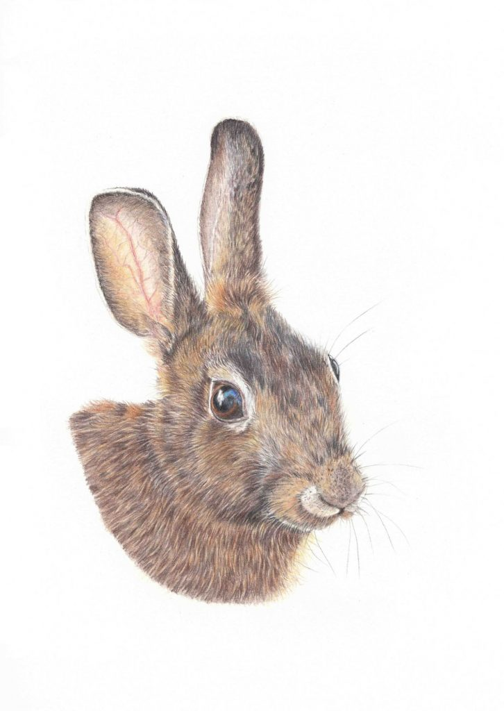 Rabbit for dragonfly - Chris Haywood