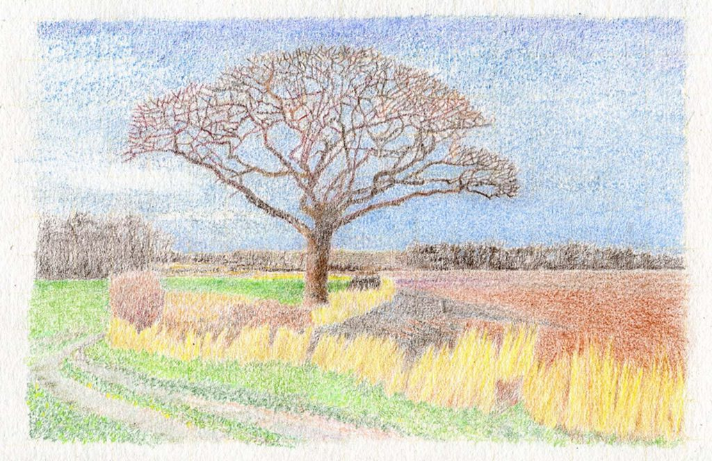 Isolation III - Coloured pencil -Charlotte Harker - 20 x 15 cm - £175