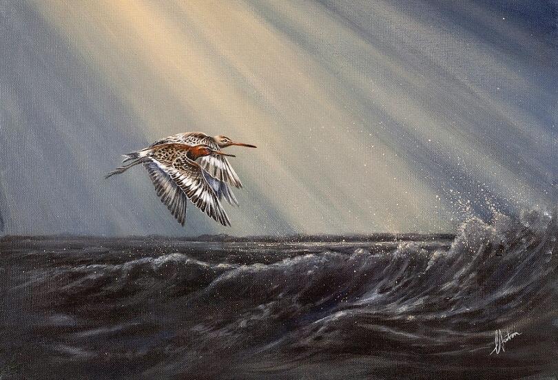 Lorraine Auton - Black Tailed Godwits - Acrylic - 59 x 46 cm - £225
