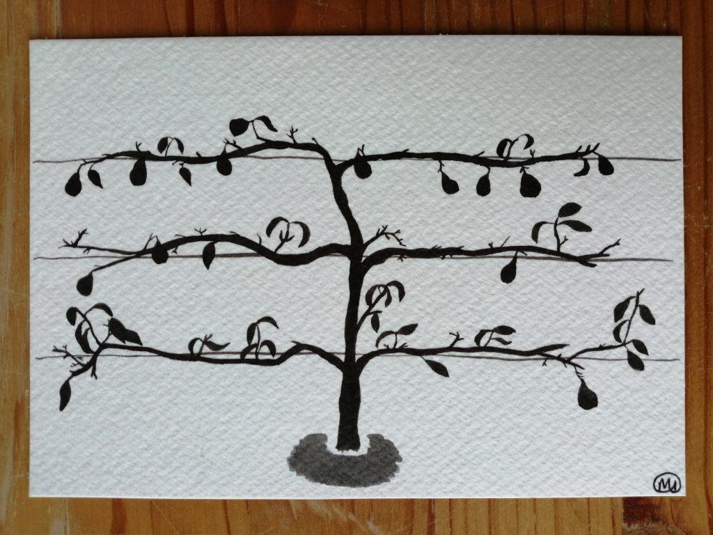 Maddy Iszchak - Espalier Pear Tree - Ink - 14.8 x10. 3 cm - £30