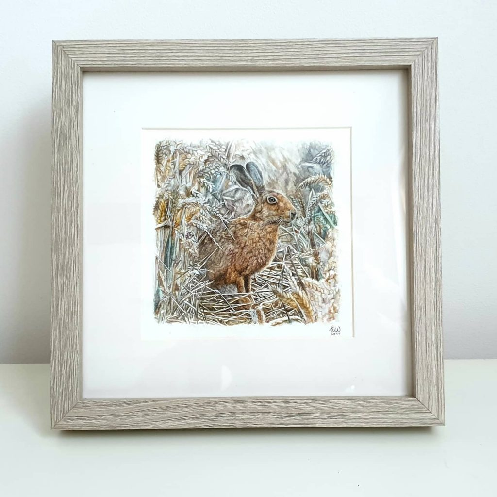 Tori Woolley - Harvest Hare -  Watercolour - (Signed) Available with or without frame - £50 / £60