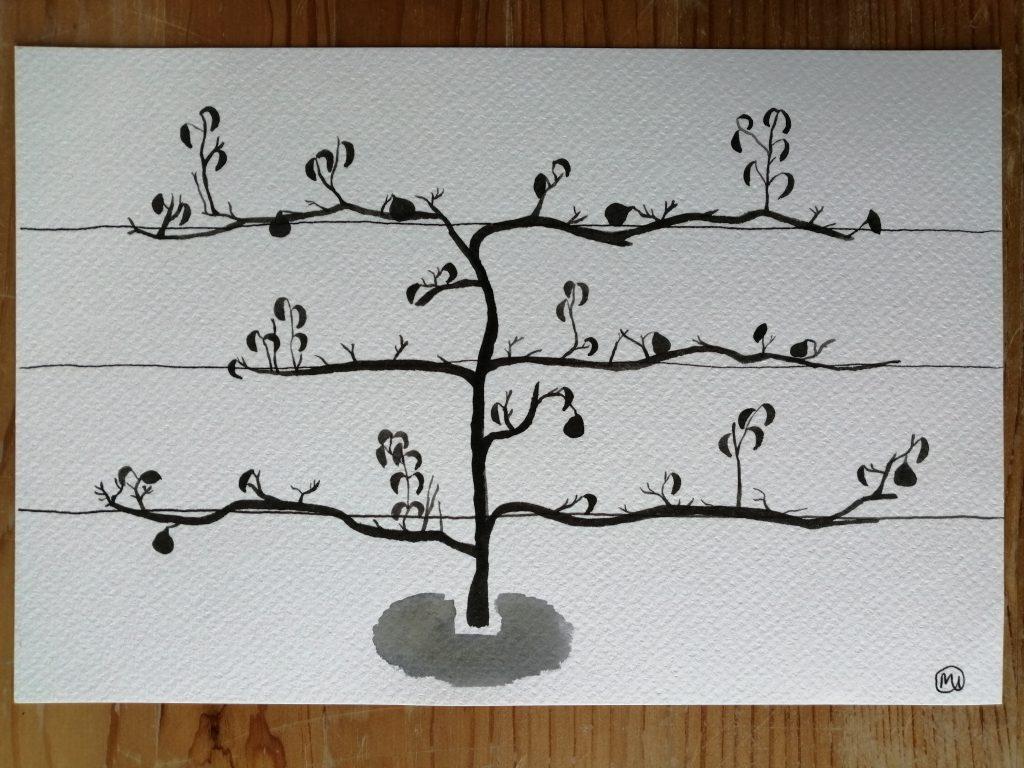 Maddy Iszchak - Espalier Pear Tree -  Ink - 24 x 16cm - £40