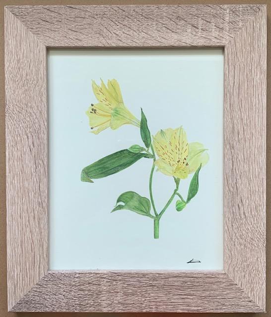 Laura Carey - Alstroemeria- Watercolour on card - 20 x 25.5 cm- £52