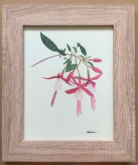 Laura Carey - Fuchia - Watercolour on card - 20 x 25.5 cm -  £52
