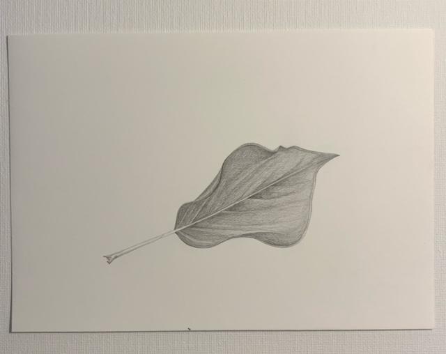 Laura Carey - Leaf - Pencil on paper - £32