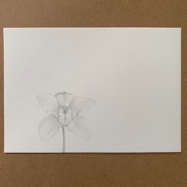 Laura Carey - Orchid - Pencil on paper - £38