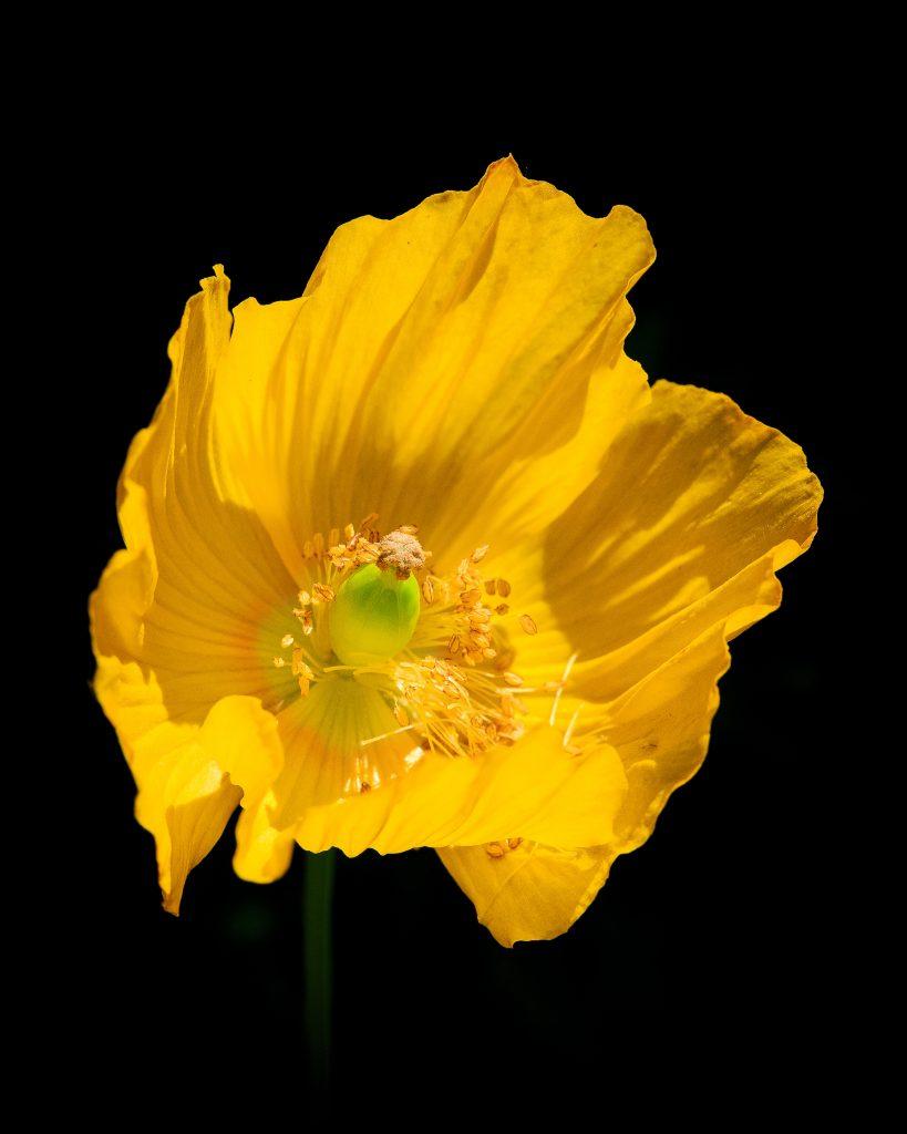 The Pure Image Works - The Sunshine Bloom - Photo on aluminium - 51 x 41 cm - £160