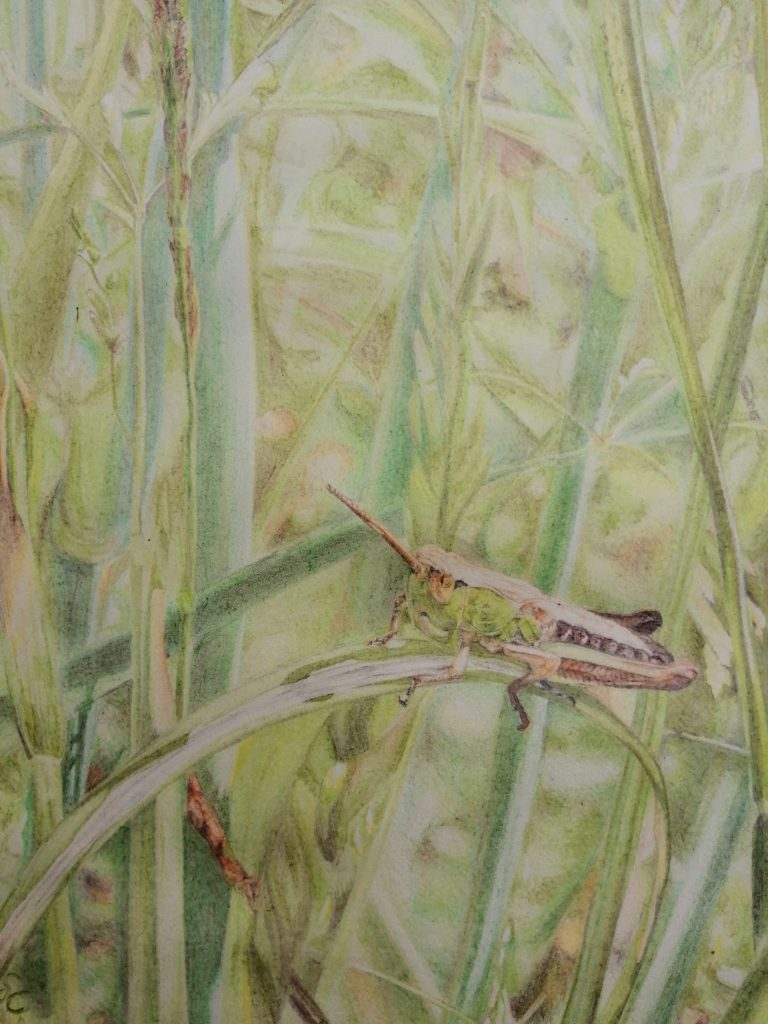 Sam Clift - Watching the world go by - Pencil crayon on paper - 17 x 19 cm - £180