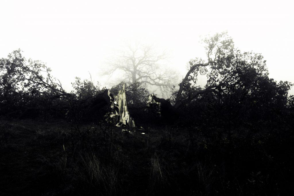 Samuel Golc - Reincarnation - Photography, giclee print - 75 x 50 cm - £100