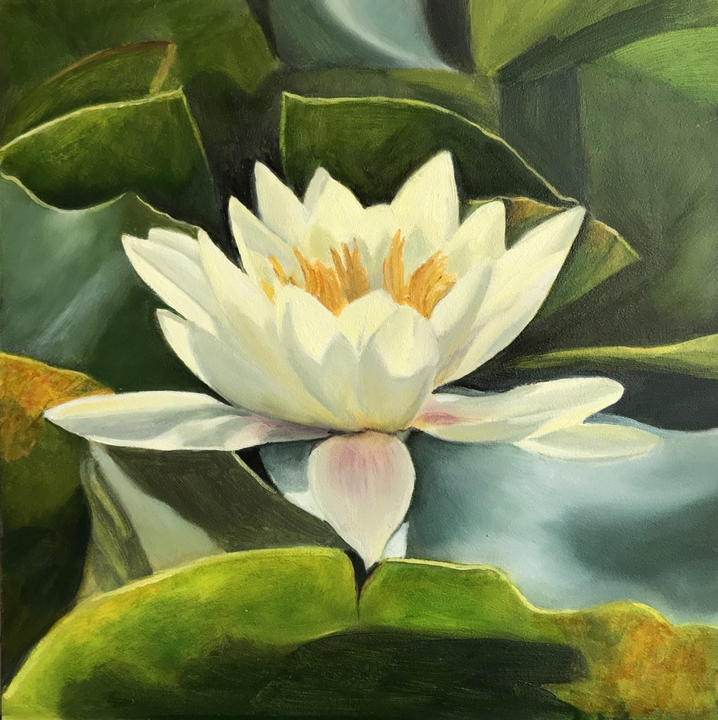 Nicola Currie - Spetchley Gardens Water Lily - Oil paint on gesso board - 20.32 x 20.32 cm - £250