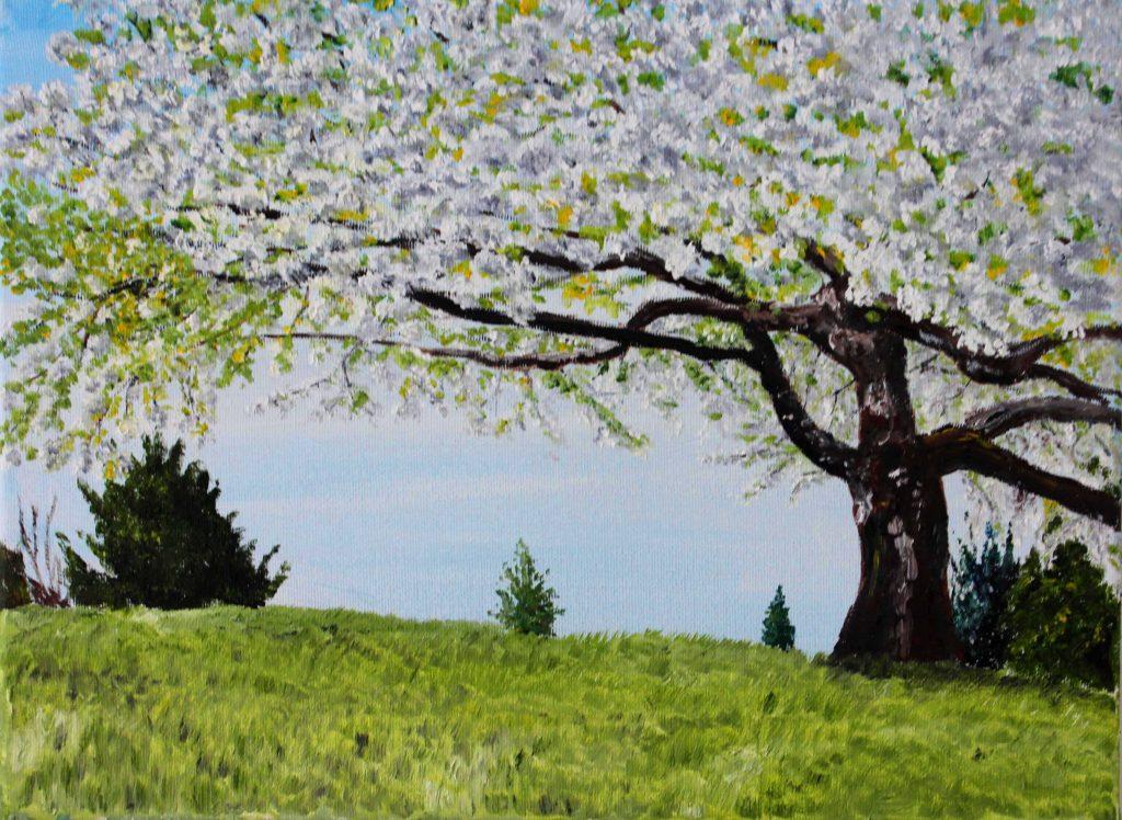 Clive Bohannan - White Cherry - Oil on Canvas - 40 x 30 cm - £120