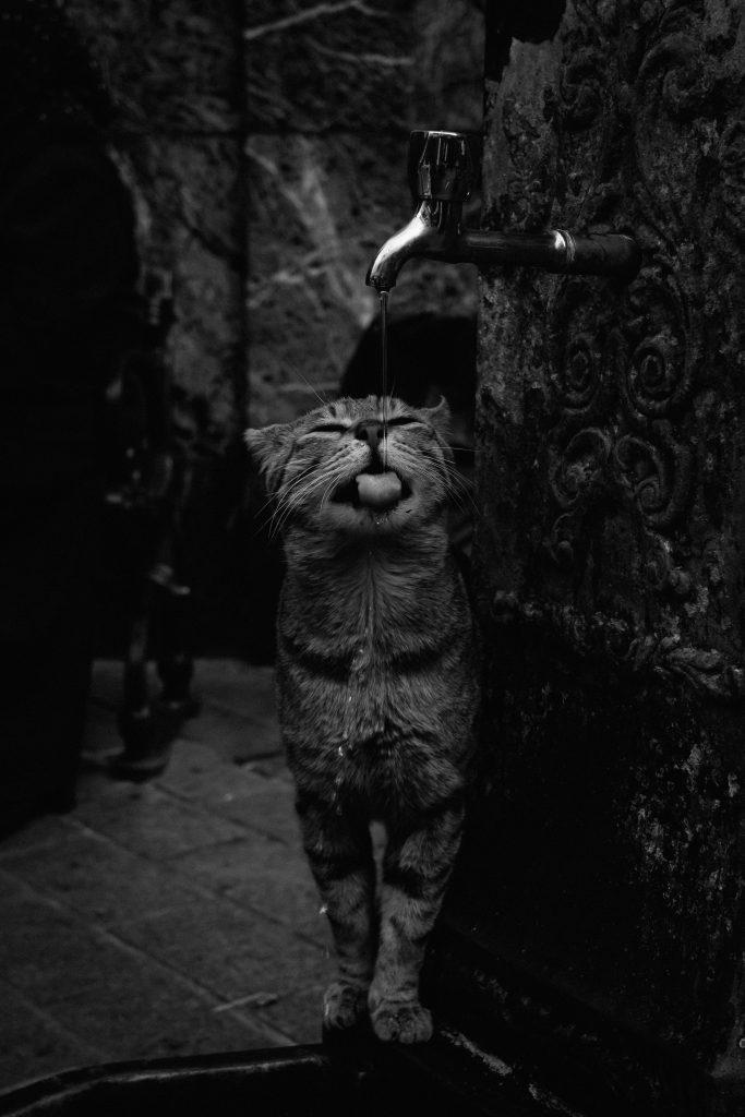 Lorna Faulkes - Feline Thirsty - Photo print - a4 / a3 - £18.50 / £37.50