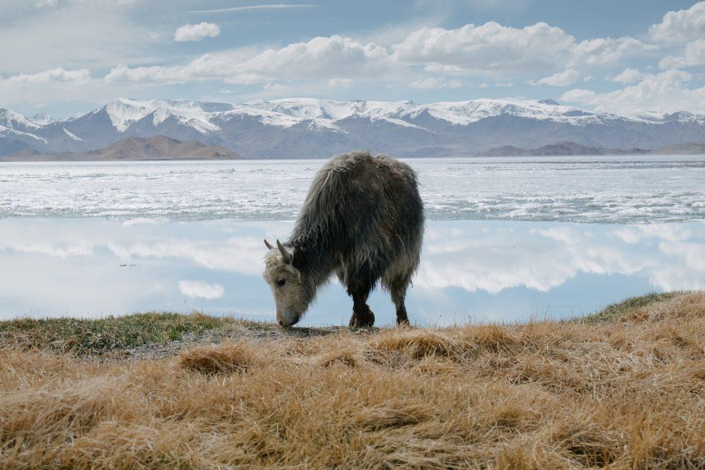 Lorna Faulkes - On the Edges of Lake Karakul - Photo print - a4 / a3 - £18.50 / £37.50