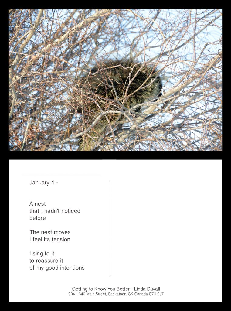 Linda Duvall - Getting to Know you Better, The Nest Moves -  Postcard - 10.16 x 15.24 cm - £50 each or £450 for set of all 10
