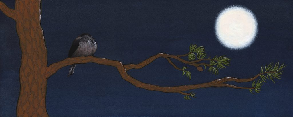 Nick Wereszczynski - Sleeping Tit with Pine - Gouache - 67 x 27 cm - £800