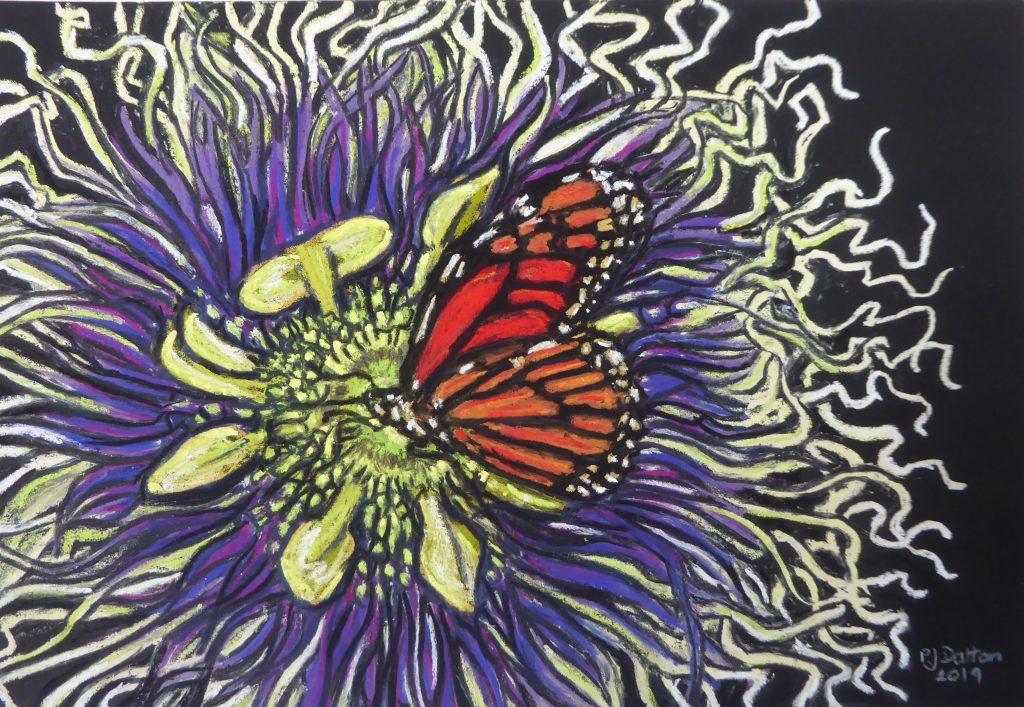 Jane Dalton - Monarch Butterfly on Passion Flower- Pastel - 53 x 45 cm - £70